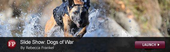 Click to launch a Foreign Policy slideshow on war dogs.