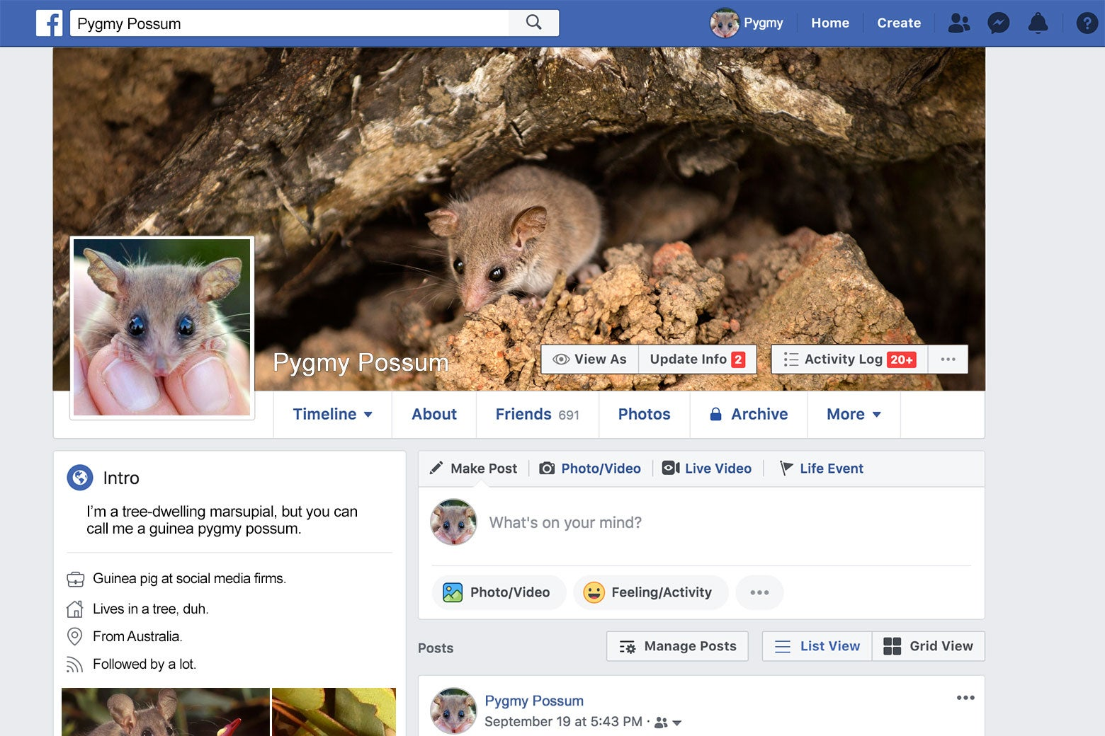 Facebook page of a pygmy possum.