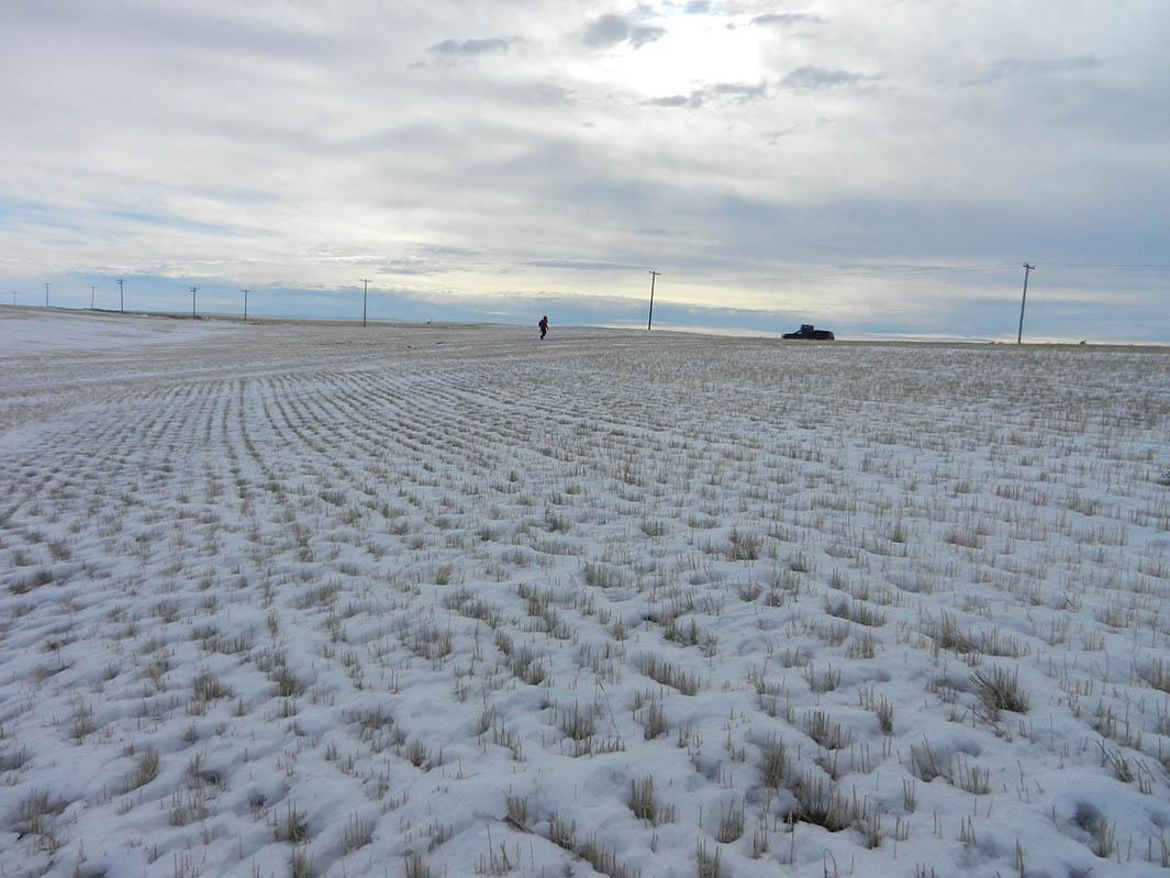 Agricultural practices could be contributing to the amount of dirt that finds its way into snowflakes. Here, a field in Montana.