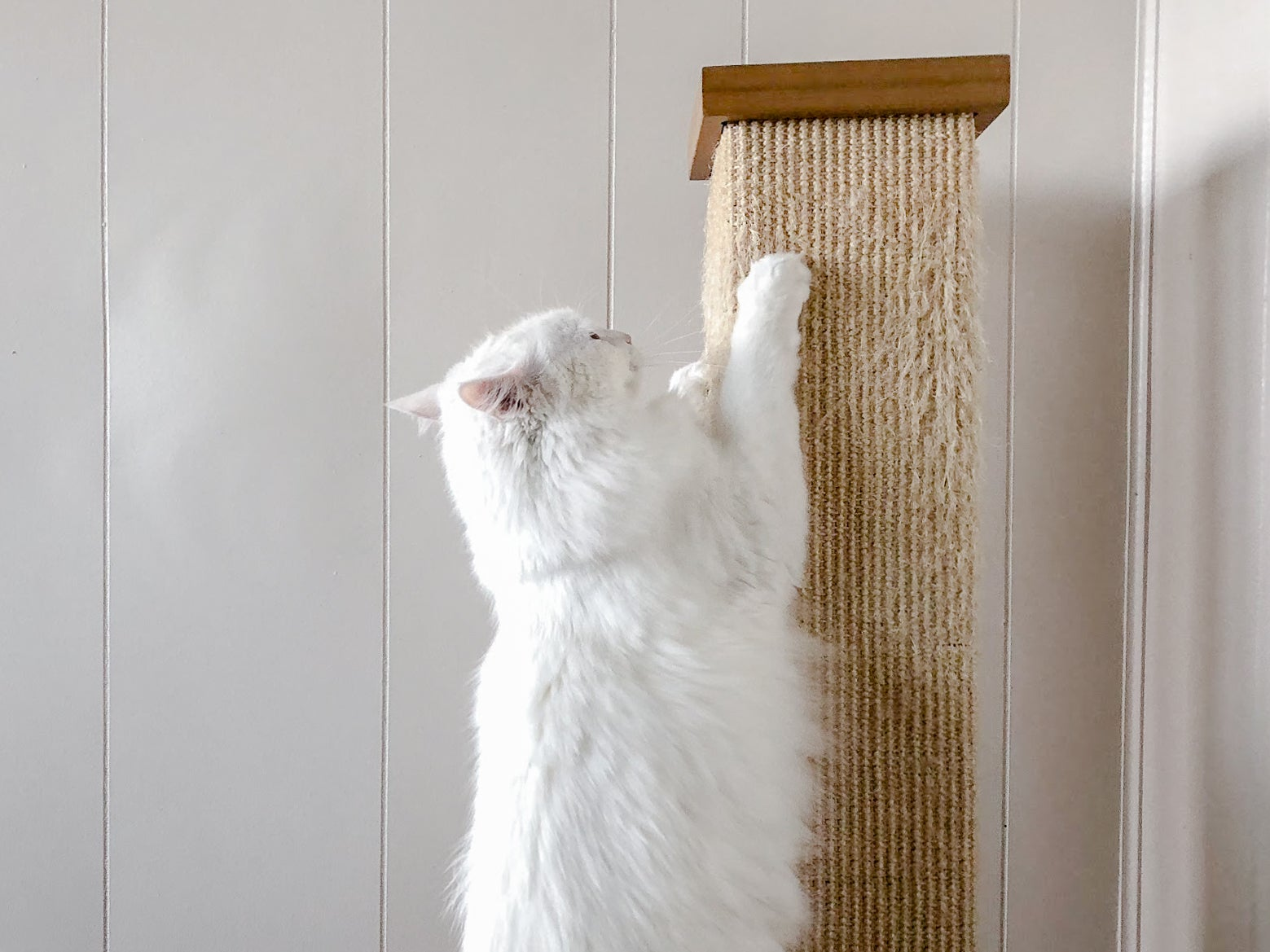 Pioneer Pet SmartCat The Ultimate Scratching Post