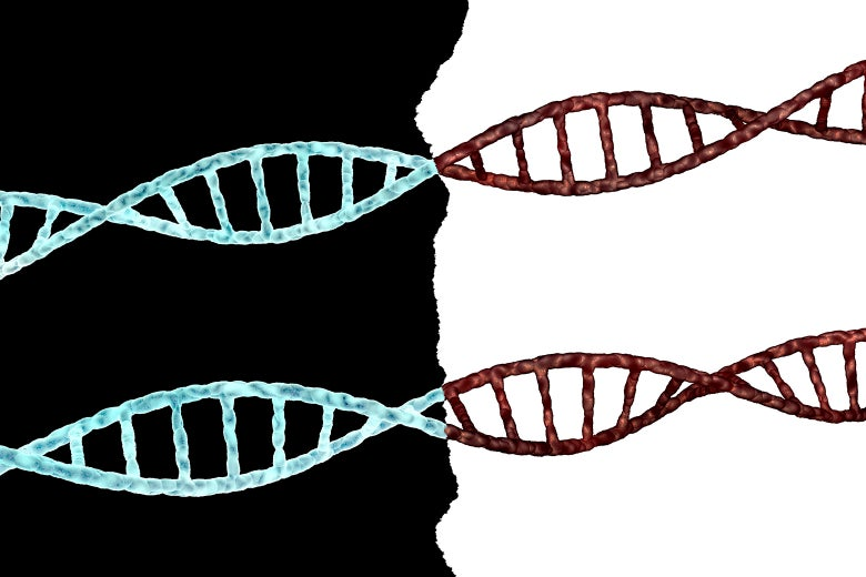 DNA strands laid out across a black and white divide.