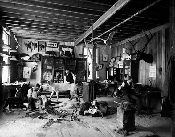 William Temple Hornaday (center), Taxidermist and Zoo Keeper, Andrew Forney, and another unidentified man, working in the taxidermists' laboratory located in a shed in the South Yard behind the Smithsonian Institution Building.