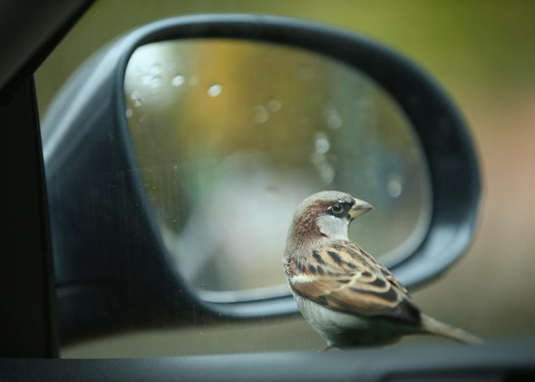 What do animals see in the mirror? Self-recognition and