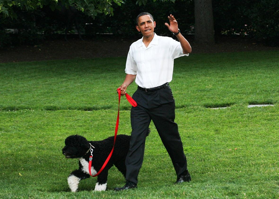 U.S. President Barack Obama walks the first dog Bo to a picnic for members of Congress on the South Lawn of the White House June 8, 2010 in Washington, DC..