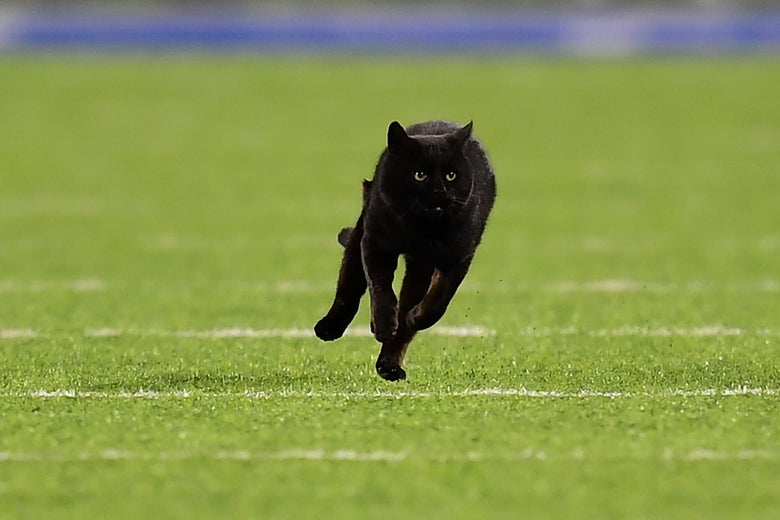 BLACK CAT ON THE FIELD
