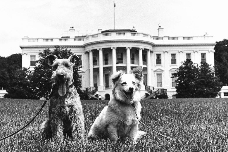 Two happy looking dogs sitting on the White House lawn.