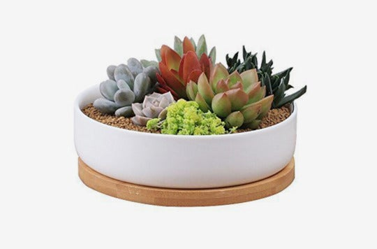 Binwen 6-inch Modern White Ceramic Planter Pot With Drainage Bamboo Tray.
