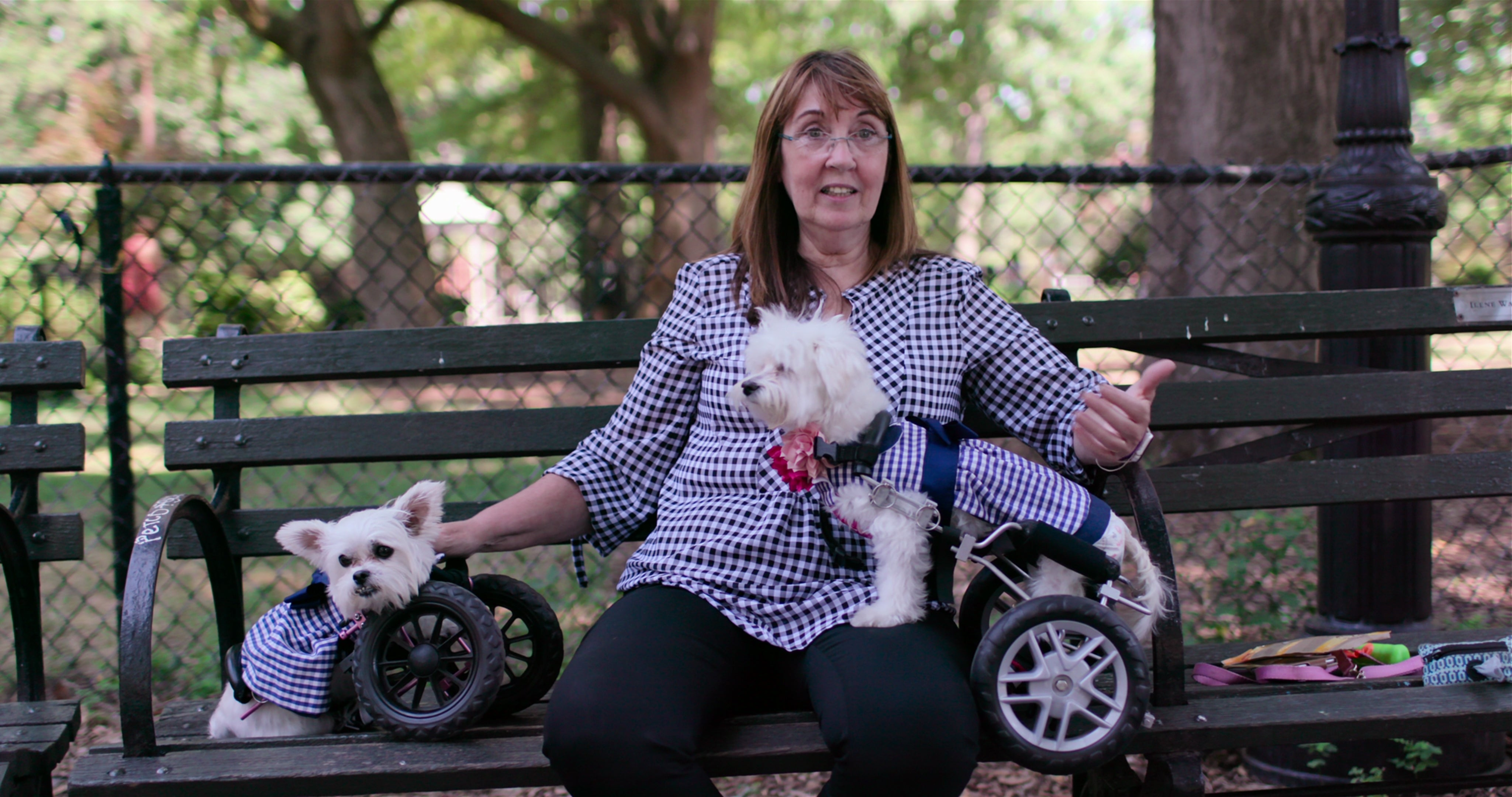 A woman and two dogs, both with wheeled leg supports, sit on a park bench.