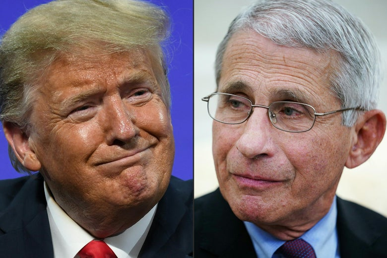 Donald Trump is seen side by side with Anthony Fauci.
