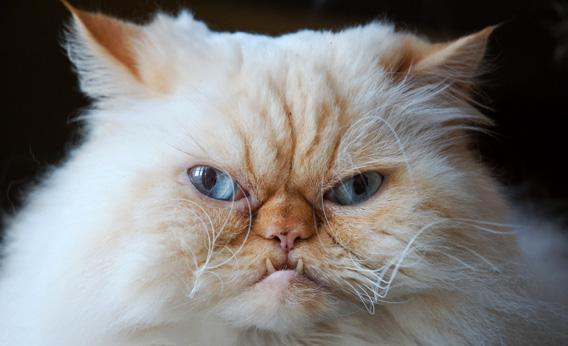 ed2401a2d New Zealand, eliminate cats: They kill endangered bird species and ...