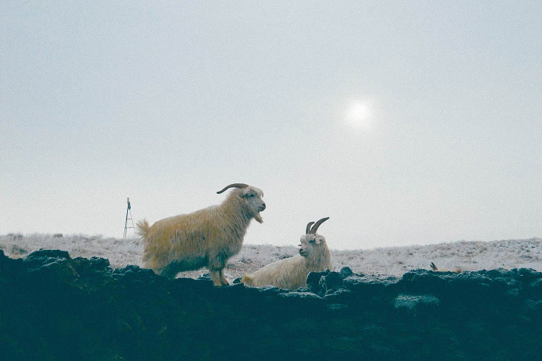 Sheep in the remote Chinese steppe.
