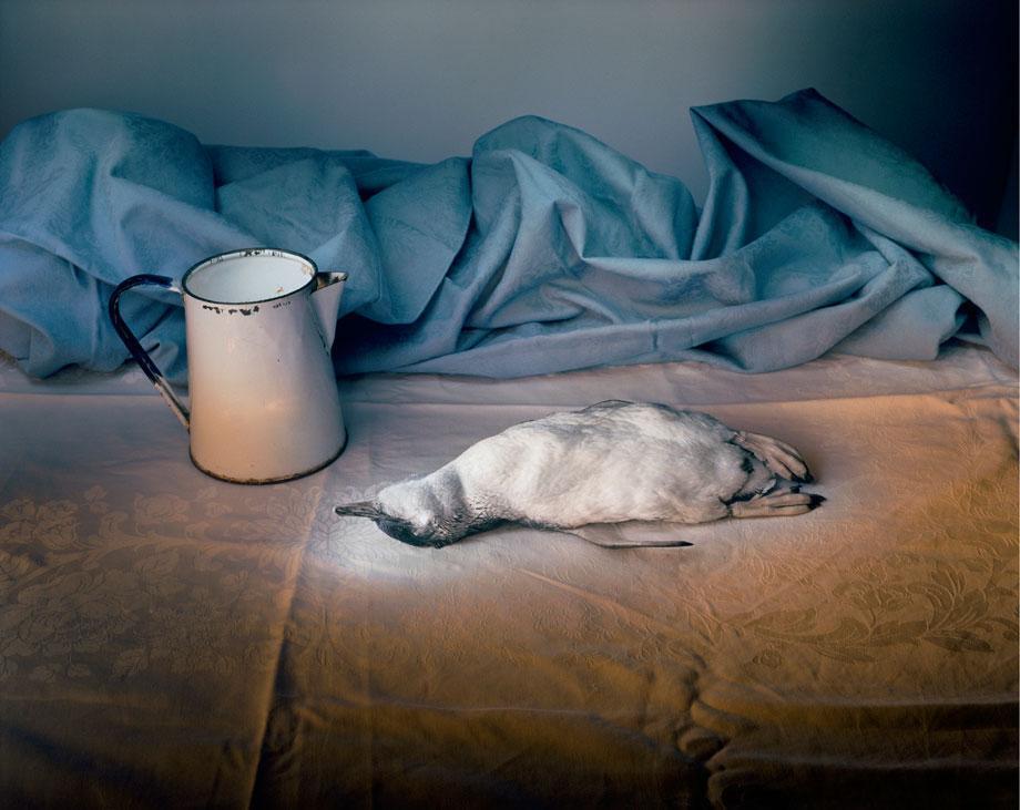 Marian Drew Still Life / Australiana (2003-2009) Penguin with eneamel jug.