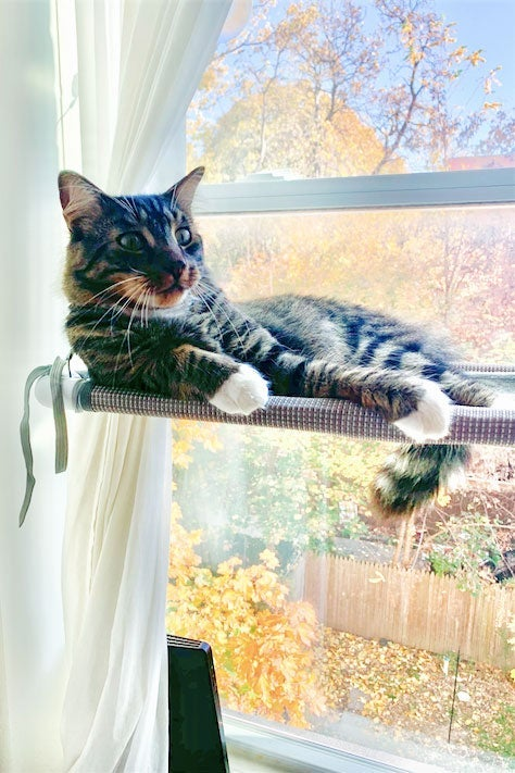 A cat is seen on a window perch.