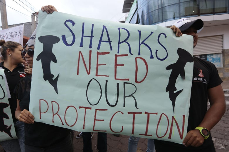 "People hold a sign that says ""Sharks need our protection."""
