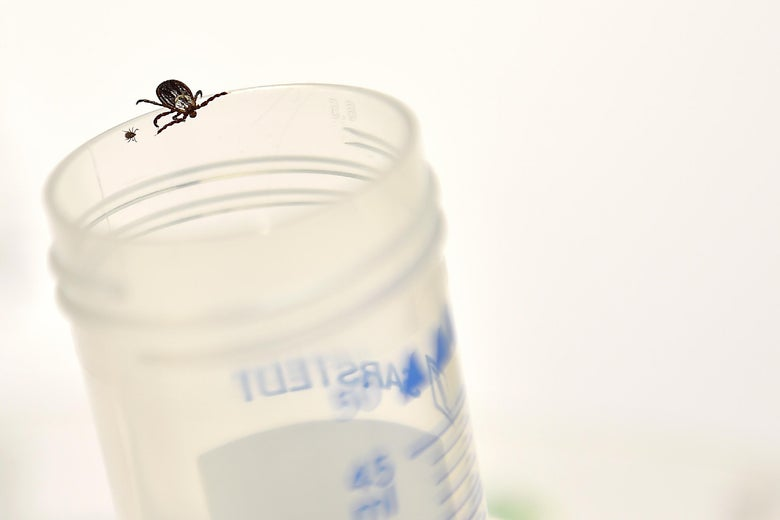 The Angle: Our Medical System Is Not Set Up to Handle Things Like Chronic Lyme