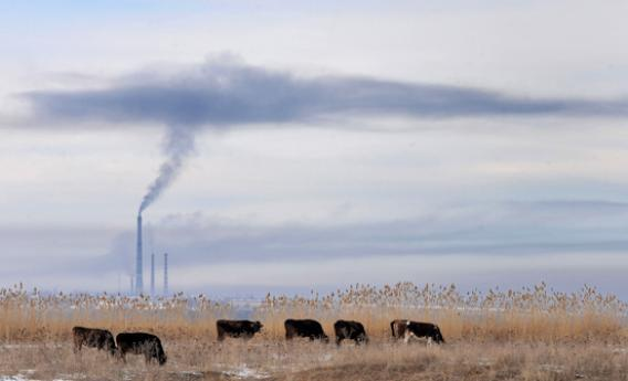 Smoke from a power generating station billows into the air over grazing cattle.