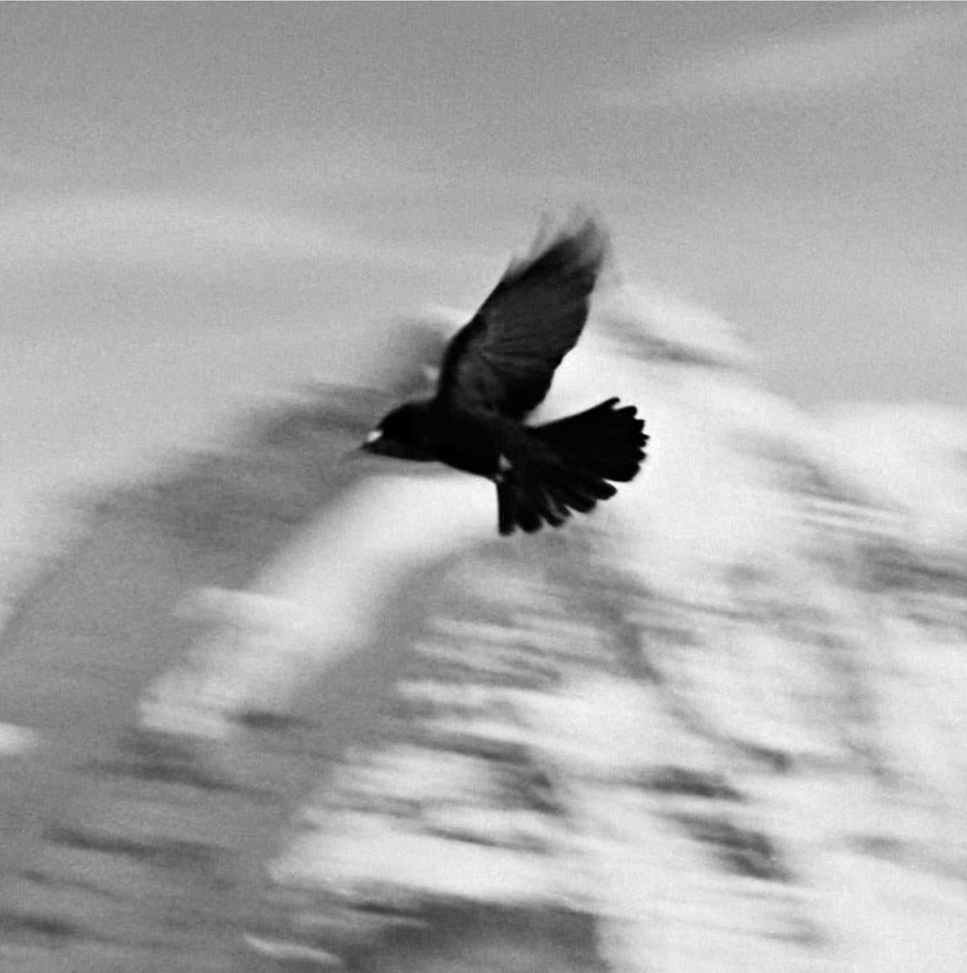 Switzerland (detail), Birds of the West Indies, 2014
