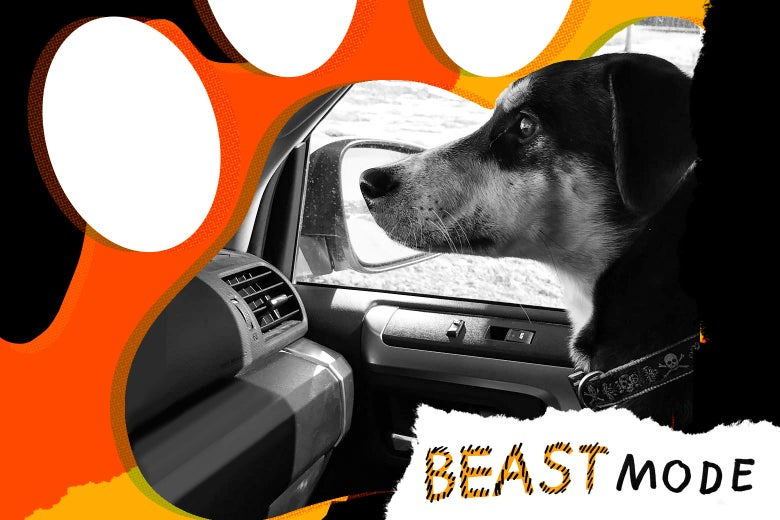 Photo illustration of a dog in the passenger seat of a car with the Beast Mode logo