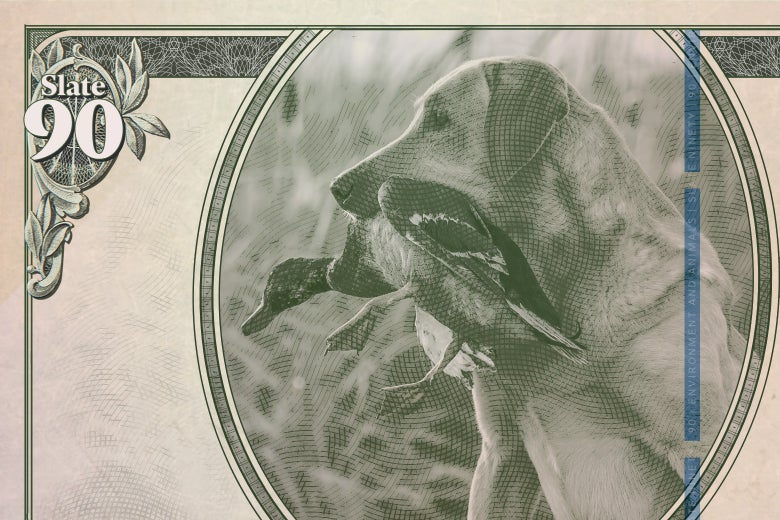 Paper currency showing a hunting dog with a duck in its mouth.