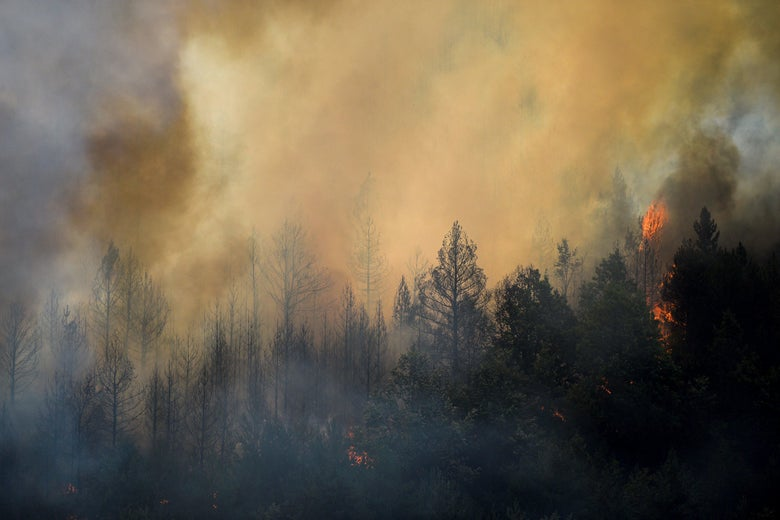 Smoke rising from a forest fire