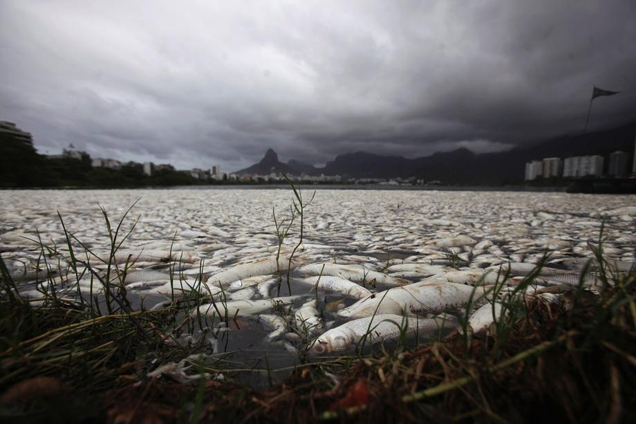 Dead fish at the Rodrigo de Freitas lagoon in Rio de Janeiro on March 14, 2013. About 65 tons of fish have been removed from the lagoon after oxygen levels dropped due to pollution, according to local media. Rodrigo de Freitas lagoon will host the rowing competitions in the 2016 Olympic Games.