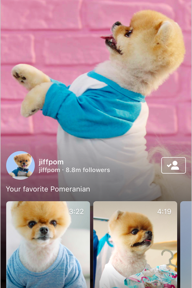Screenshot of new Instagram video feature, with doggo.