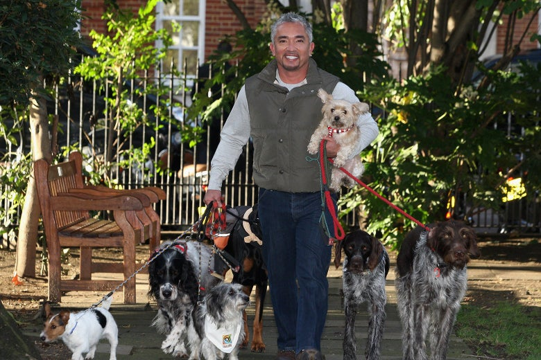 Cesar Millan, with several dogs in tow, stands in front of a bench and a gate fencing off a garden.