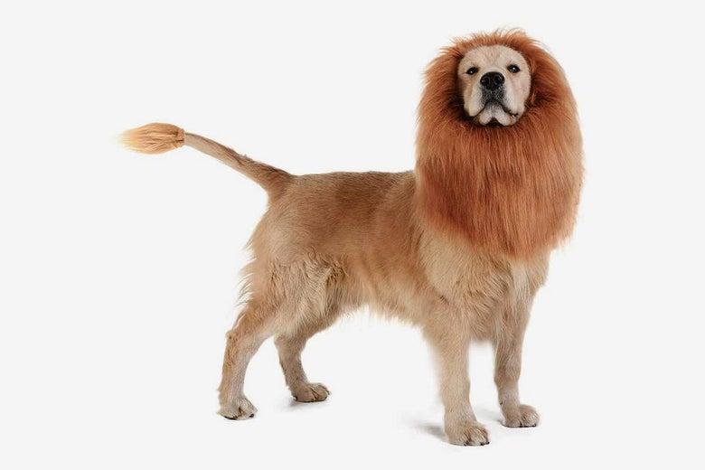 TOMSENN Dog Lion Mane