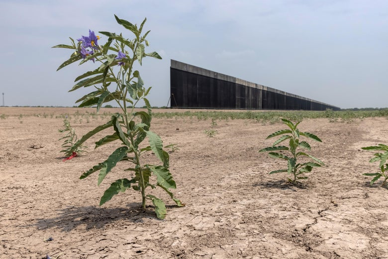 A section of the border wall stops halted in the desert with a flower in the foreground.