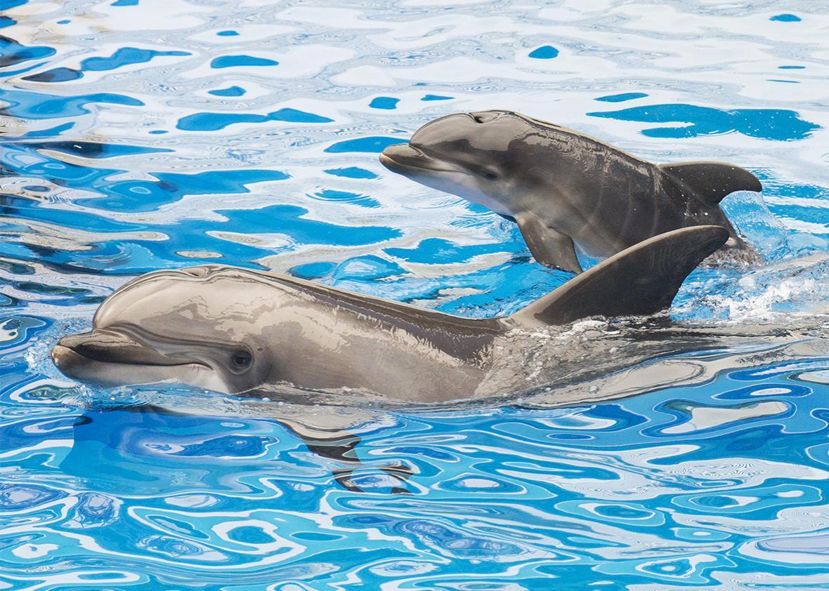 dolphin seaworld.