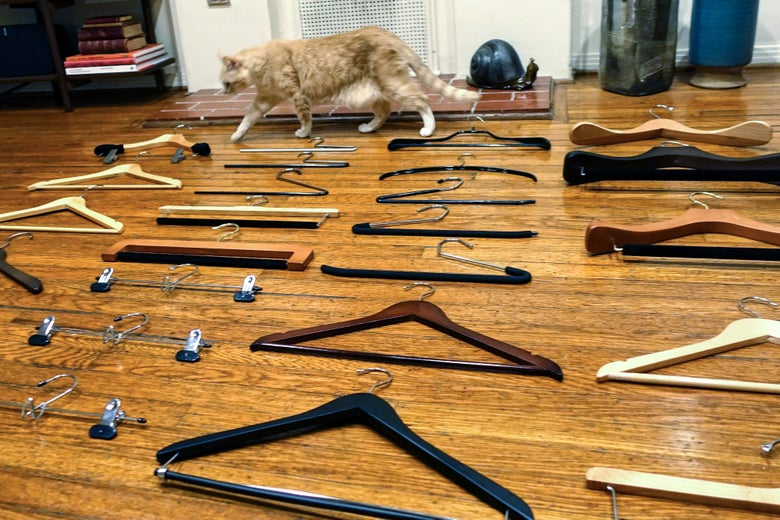 A cat among hangers.