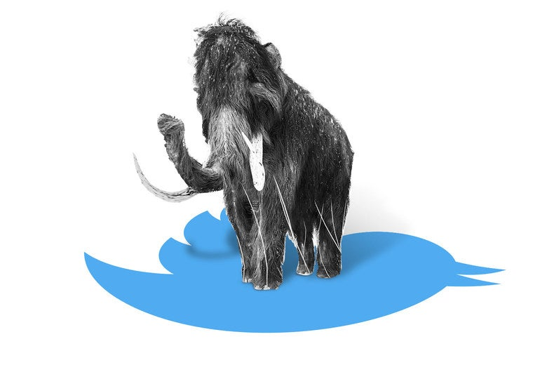 A mastodon on the Twitter bird.