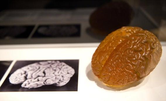 A model of Einstein's brain