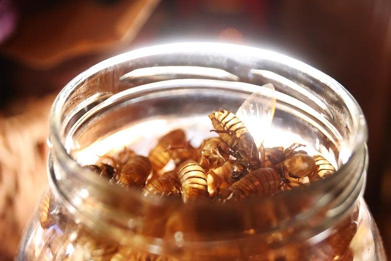 a jar of cicada shells