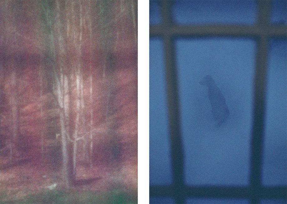 Backyard Through Red Curtain, Mount Tremper, N.Y., 2005 (l); Sundance, Mount Tremper, N.Y., 2010