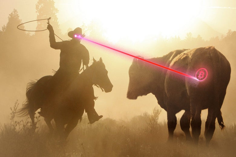 A cowboy with lasers coming out of his eyes etches a Bitcoin logo (in laser) on a cow's rear end.