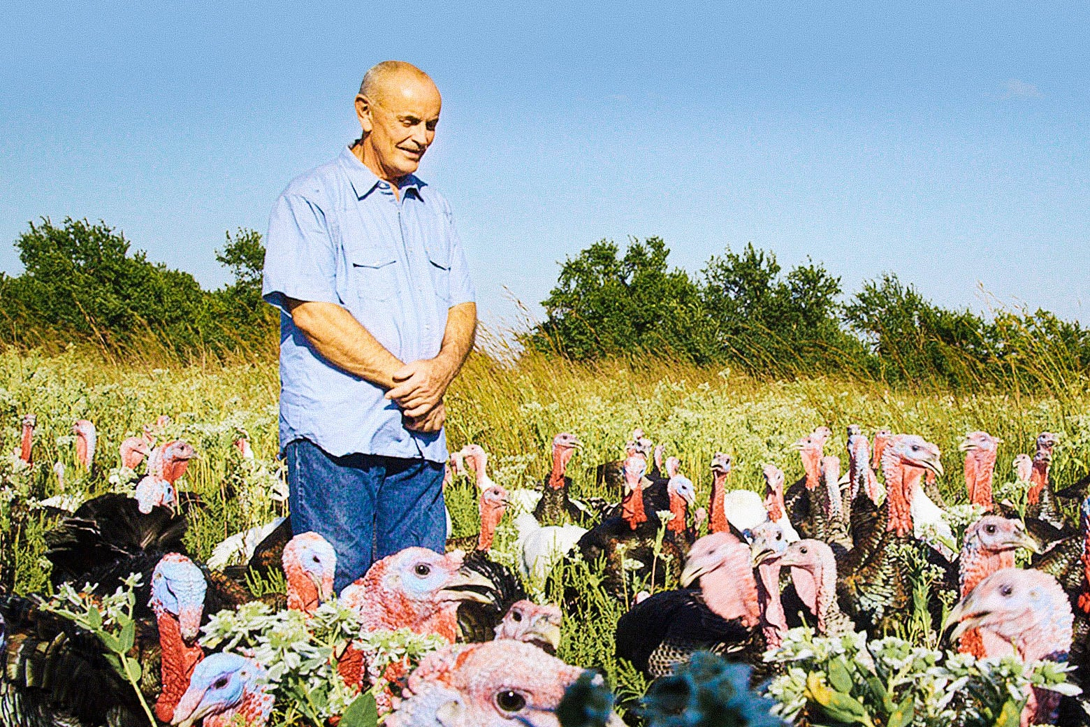 Still from Eating Animals: A man stands among turkeys in a field.