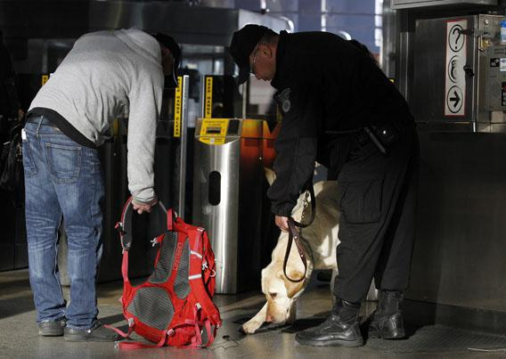 A Transit Police dog with the Massachusetts Transportation Authority Explosives Detection Unit, sniffs a bag at Back Bay Station as commuters enter the subway system a day after two explosions near the finish line of the Boston Marathon.