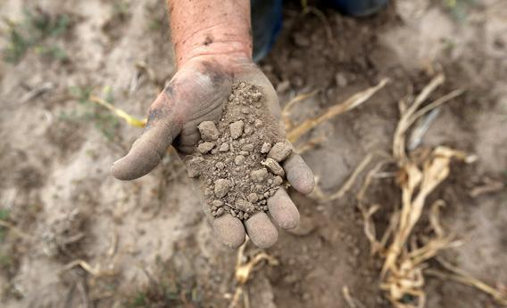 Darren Becker sifts through arid topsoil under a ruined crop on the family farm.