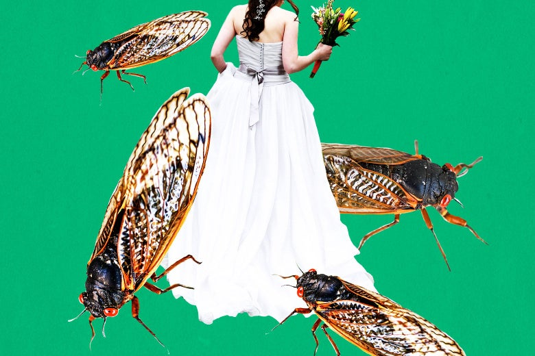 A bride in her wedding dress, surrounded by cicadas.