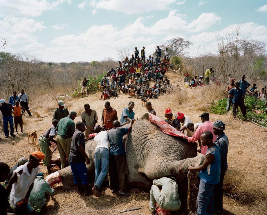 untitled # IV, from the series elephant story, chitsa 'campfire' area, adjacent to the gonarezhou national park, zimbabwe.