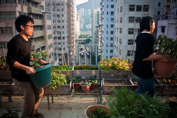 Urban farms are sprouting from the rooftops of Hong Kong's high-rises in an attempt to bridge the gap between city and nature.
