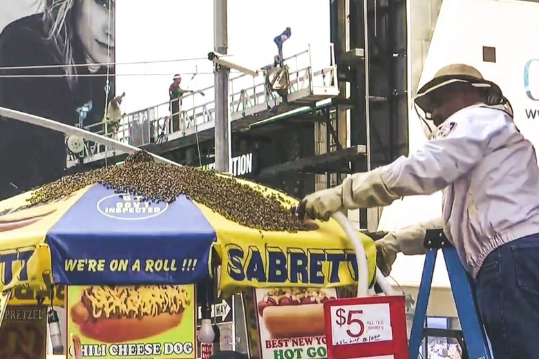 A police officer vacuums up thousands of bees on top of a hot dog cart umbrella in Times Square.