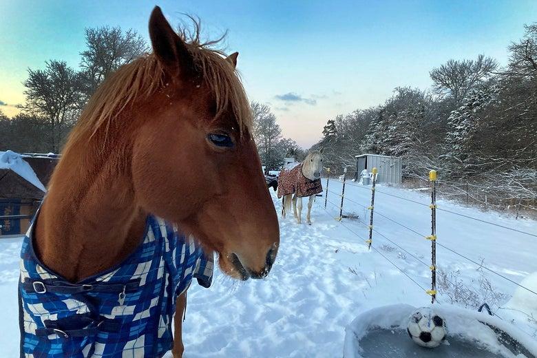 horses looking at frozen water