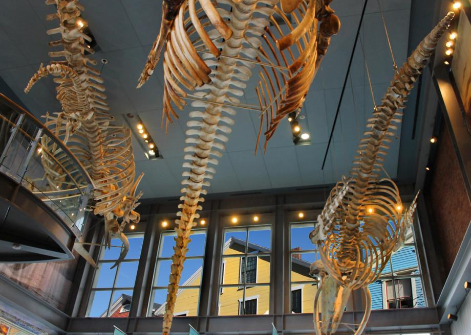 At the New Bedford Whaling Museum in Massachusetts, you'll find the