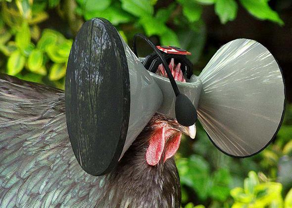 Second Livestock, chicken virtual reality: Iowa State professor Austin Stewart's technology commentary.