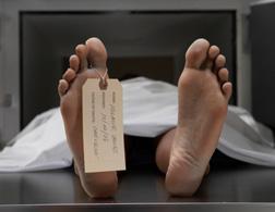 Cadaver. Click image to expand.