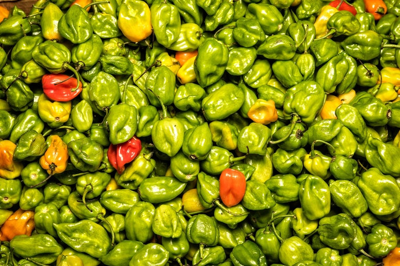Habanero chili peppers are sold at a stand in the Jamaica Market in Mexico City on November 3, 2016.