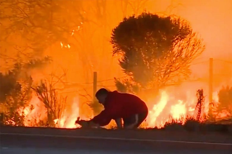 Do not save wild animals from wildfires.