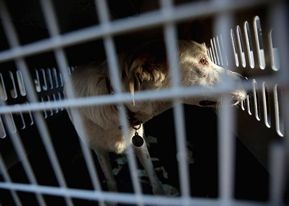No-kill animal shelters and PETA: What is the most humane